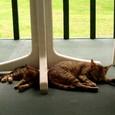 バルコニーで昼寝する親子