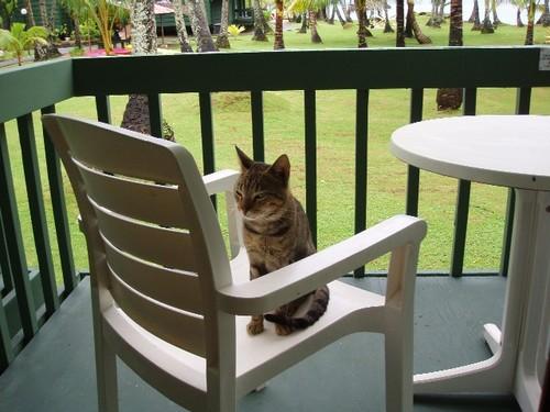 てっちゃんの席を奪ったネコ