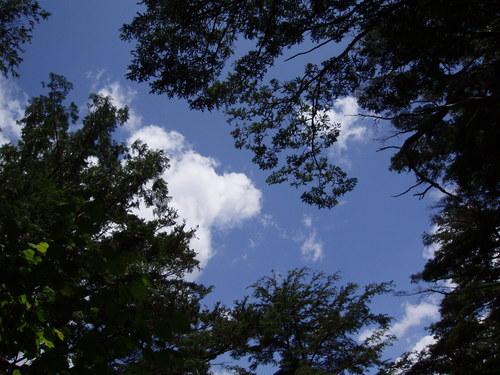 木々の間から夏空