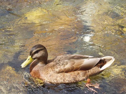 木彫りの鴨